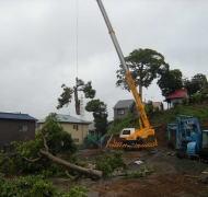神木の伐採
